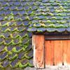Как удалить мох и лишайник с крыши?